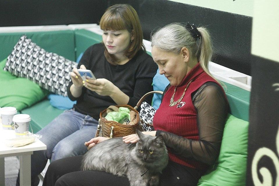ВВолгограде открылось первое замурчательное котокафе