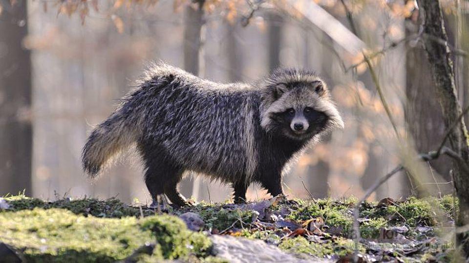 ВВолгоградской области посчитали поголовье околоводной фауны ибарсуков