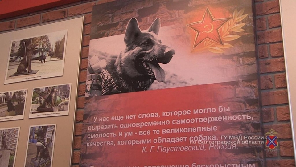 ВВолгограде появился музей истории работы служебных собак