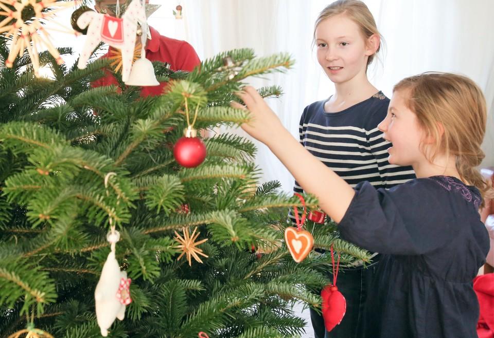 Какую елку выбрать на Новый год – искусственную или живую