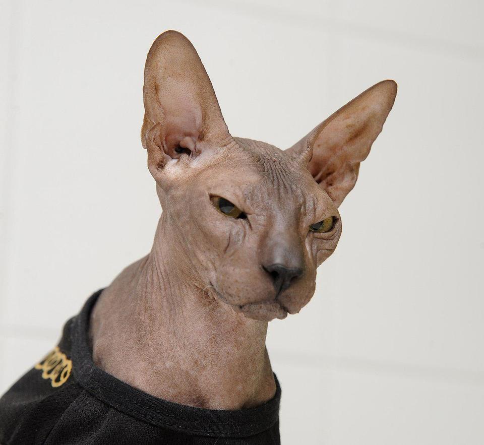 Обои кошка, лето, кот, усы, взгляд, морда, котэ картинки на ... | 883x960