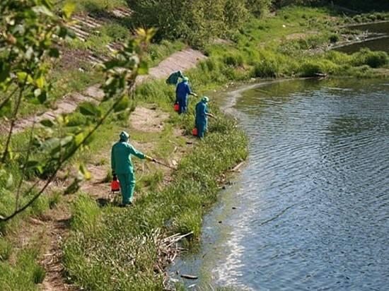 Водоемы Волгоградской области обработают против комаров и клещей