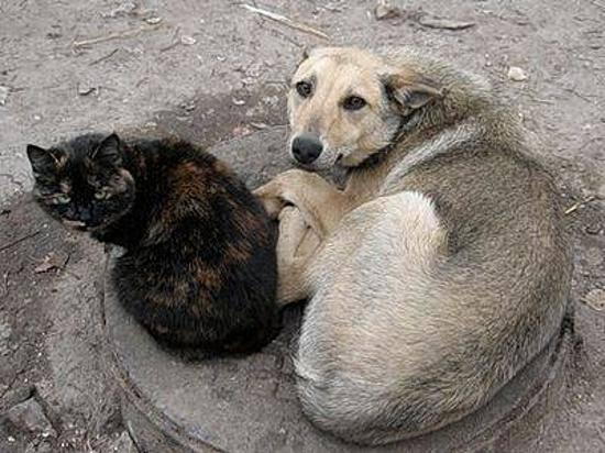 Генпрокуратура заинтересовалась семейной парой изВолгограда, поедающей собак икошек
