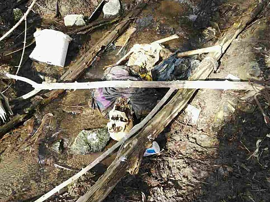 ВВолгограде волонтеры впроцессе поисков человека случайно наткнулись наскелетированый труп