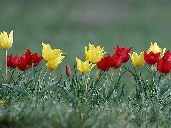 ВВолгоградской области словили 2-х браконьеров скраснокнижными первоцветами