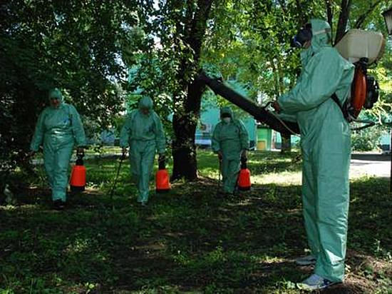 ВВолгоградской области начали борьбу скомарами