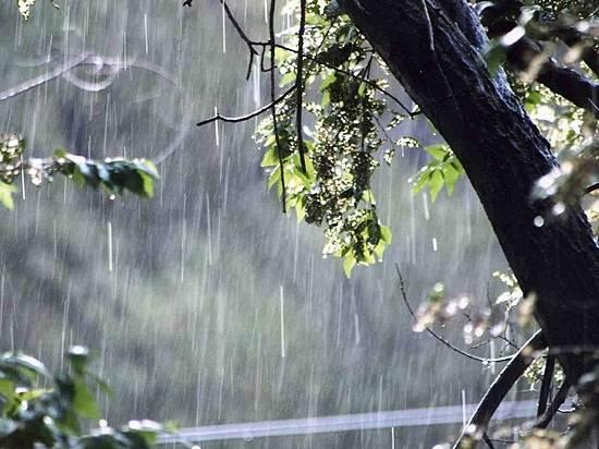 ВВолгограде сегодня пойдет дождь сгрозой ипорывистым ветром