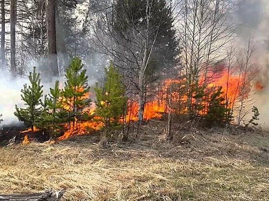 ВВолгоградской области объявлен высокий уровень пожароопасности— Предупреждение
