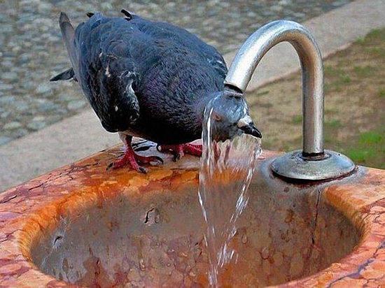 МЧС: «НаВолгоград надвигается 40-градусная жара»