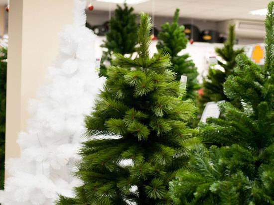 """Картинки по запросу """"Какой тип елки выбрать на Новый год"""""""""""