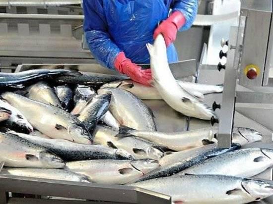 В Волгограде за антисанитарию оштрафовали предприятие по переработке рыбы